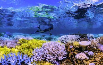 در تعقیب مرجان ها