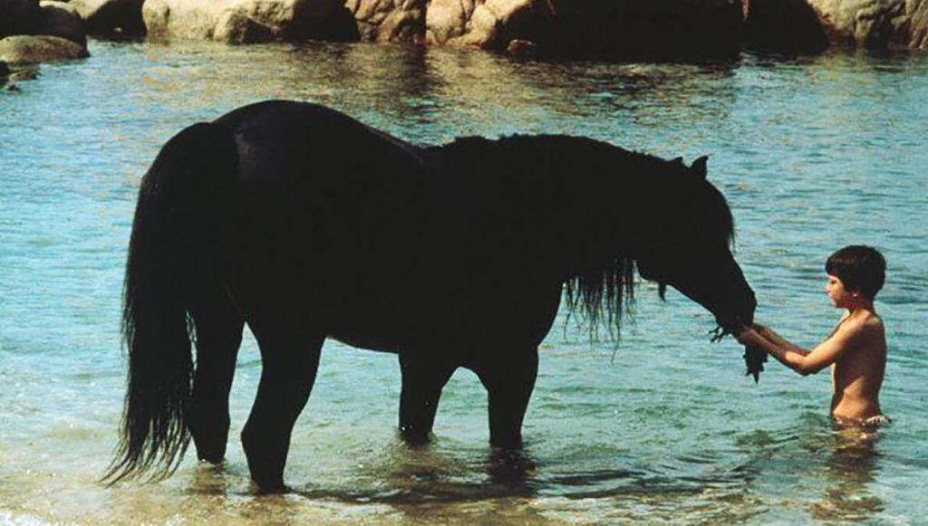 اسب سیاه